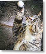 Starry Night Kitty Style - Featured  In Comfortable Art Group Metal Print