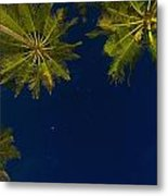 Stars At Night With Palm Tree Thalpe Metal Print