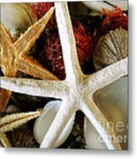 Stars Of The Sea Metal Print by Colleen Kammerer
