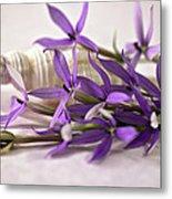 Starshine Laurentia Flowers And White Shell Metal Print