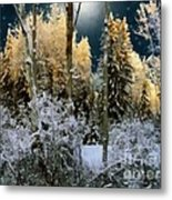 Starshine On A Snowy Wood Metal Print