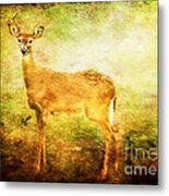 Startled Metal Print