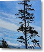 Stately Pine Metal Print