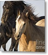 Stealing The Mare Metal Print