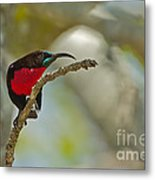 Stealth Attack Metal Print by Ashley Vincent