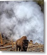 Steamed Bison Metal Print