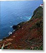 Steep Vineyards Metal Print