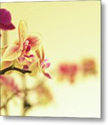Stem Of Orchids Metal Print