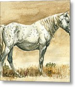 Sterling Wild Stallion Of Sand Wash Basin Metal Print by Linda L Martin