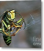 Sticky Situation Metal Print
