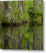 Stillness Swamp Metal Print