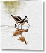Stilt And Avocet Eat Together Metal Print