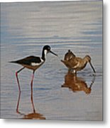 Stilt And Dowitcher  Metal Print