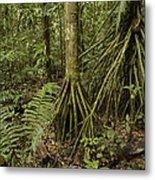 Stilt Roots In The Rainforest Ecuador Metal Print