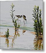 Stilts Hunting And Pecking Metal Print