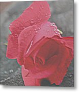 Stone Cold Rose Metal Print