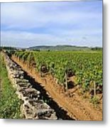 Stone Wall. Vineyard. Cote De Beaune. Burgundy. France. Europe Metal Print
