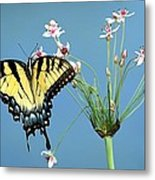 Stop And Smell The Flowers Metal Print