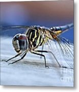 Stop By Tiger Dragon Fly Metal Print by Peggy Franz