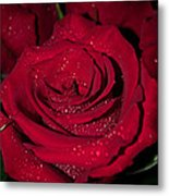 Stop To Smell The Roses Metal Print