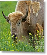 Stopped To Smell The Flowers Metal Print