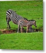 Stopping For A Drink Metal Print