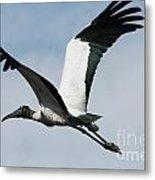Stork In Flight Metal Print