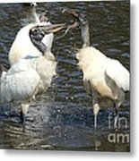 Stork Squabble Metal Print