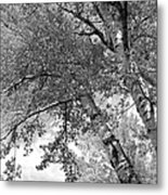 Storm Over The Cottonwood Trees - Black And White Metal Print
