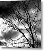 Stormy Beauty Metal Print by Candice Trimble