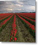 Stormy Red Tulips Metal Print