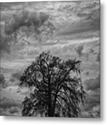 Stormy Tree Metal Print