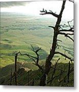 Stormy Tree Metal Print