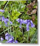 Stormy Wild Bluebell  Metal Print by Tim Rice