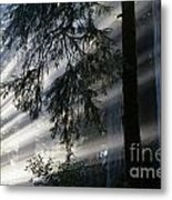 Stout Grove Redwoods With Sunrays Breaking Through Fog Metal Print