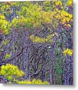 Straggly Pines Metal Print