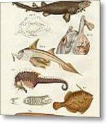 Strange Cartilageous Fish Metal Print