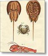 Strange Crabs Metal Print