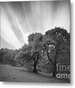 Strange Trees On Meadow Metal Print
