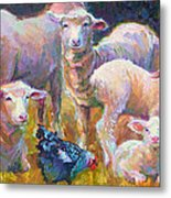 Stranger At The Well - Spring Lambs Sheep And Hen Metal Print