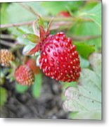 Strawberry Metal Print