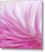 Strawflower Impression #3 Metal Print