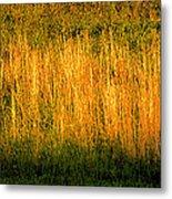 Straw Landscape Metal Print