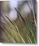 Straws In The Wind Metal Print