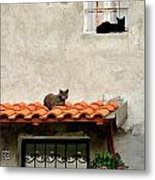 Stray Cats Art Composition Metal Print