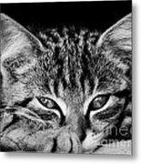 Stray Kitten Metal Print
