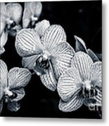 Stream Of Orchids Metal Print