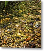 Stream Water Metal Print