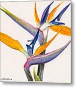 Strelitzia Flowers Metal Print