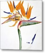 Strelitzia Reginae Flowers Metal Print